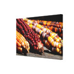 Indian Corn Wrapped Canvas Print