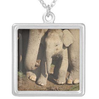 Indian Elephant calf,Corbett National Park, Custom Necklace