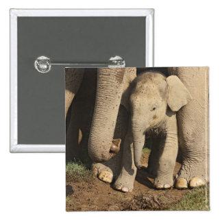 Indian Elephant calf,Corbett National Park, Pinback Button