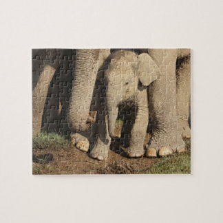 Indian Elephant calf,Corbett National Park, Puzzle