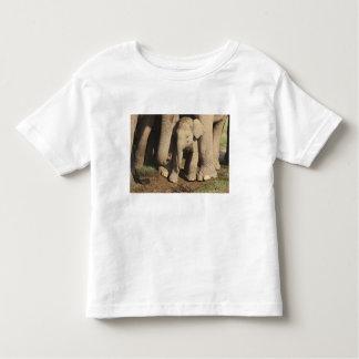 Indian Elephant calf,Corbett National Park, Toddler T-shirt