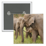 Indian Elephant calf playing with adults,Corbett Pinback Buttons