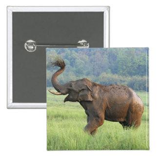 Indian Elephant dust bathing,Corbett National Buttons