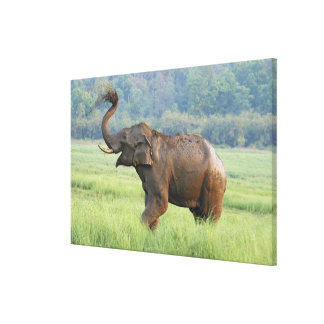 Indian Elephant dust bathing,Corbett National Gallery Wrapped Canvas