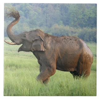 Indian Elephant dust bathing,Corbett National Ceramic Tile