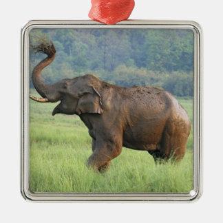 Indian Elephant dust bathing,Corbett National Metal Ornament
