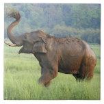 Indian Elephant dust bathing,Corbett National Ceramic Tiles