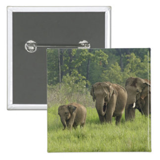 Indian Elephant family coming out of Button
