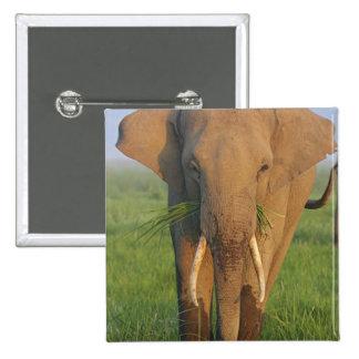 Indian Elephant feeding,Corbett National Park, Pinback Button