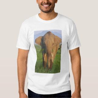 Indian Elephant feeding,Corbett National Park, Shirt