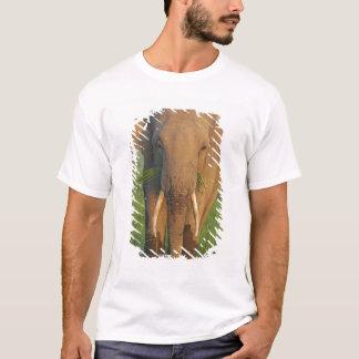 Indian Elephant feeding,Corbett National Park, T-Shirt