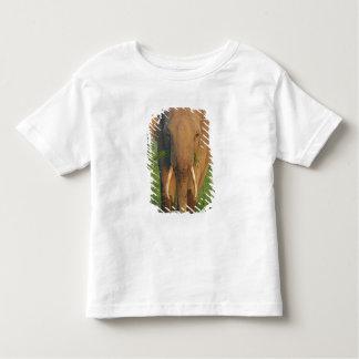 Indian Elephant feeding,Corbett National Park, Toddler T-shirt