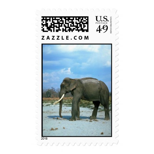 Indian Elephant-huge bull Postage Stamp