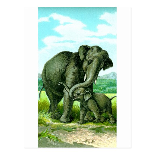 Indian Elephant Postcard