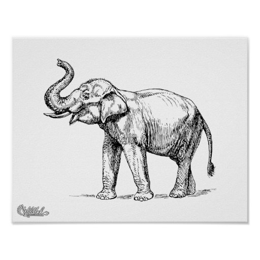 Elephant drawing posters elephant drawing prints art prints