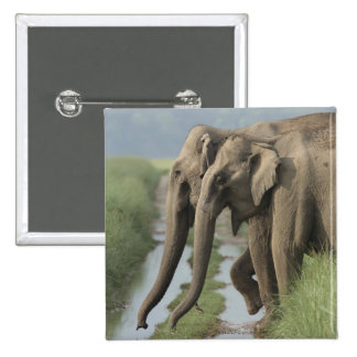 Indian Elephants crossing the track, Corbett Button