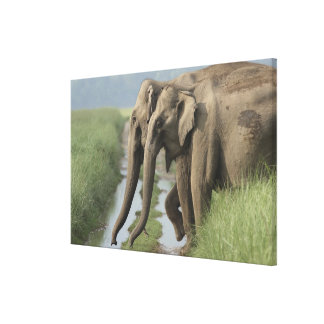 Indian Elephants crossing the track, Corbett Gallery Wrap Canvas