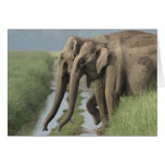 Indian Elephants crossing the track, Corbett Card