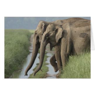 Indian Elephants crossing the track, Corbett Greeting Card