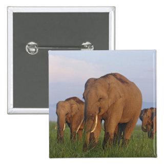 Indian Elephants in the grassland,Corbett Button
