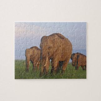 Indian Elephants in the grassland,Corbett Jigsaw Puzzle
