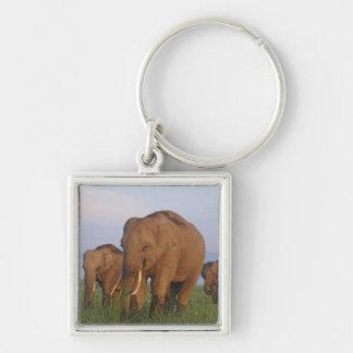Indian Elephants in the grassland,Corbett Keychain