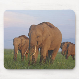 Indian Elephants in the grassland,Corbett Mouse Pad