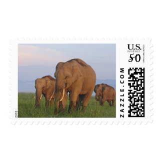 Indian Elephants in the grassland,Corbett Postage
