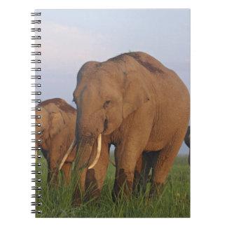 Indian Elephants in the grassland,Corbett Spiral Notebook