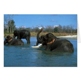 Indian Elephants lying down bathing Cards