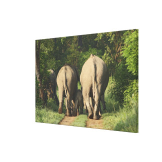 Indian Elephants on the jungle track,Corbett Gallery Wrap Canvas