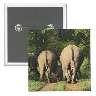 Indian Elephants on the jungle track,Corbett Pinback Button