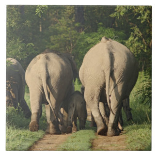 Indian Elephants on the jungle track,Corbett Tile