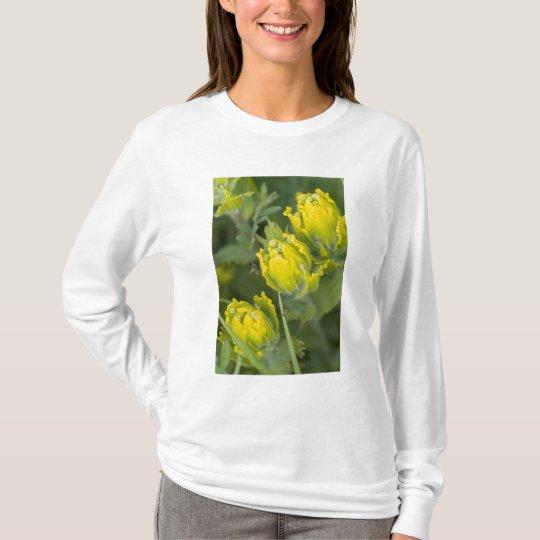 Indian Golden Paintbrush Castilleja T-Shirt