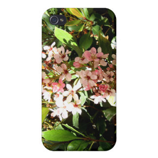 Indian Hawthorn iPhone 4/4S Case