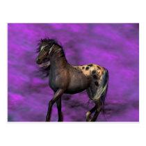 Indian Horse Postcard