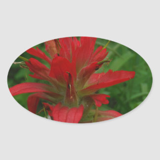 Indian paint brush oval sticker