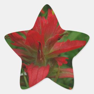 Indian paint brush star sticker