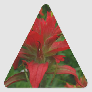 Indian paint brush triangle sticker