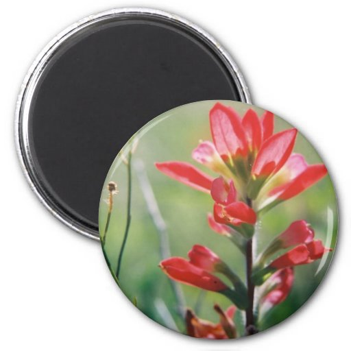 Indian Paintbrush 2 Inch Round Magnet