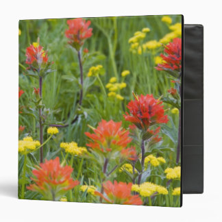 Indian paintbrush and biscuitroot wildflowers 3 ring binders