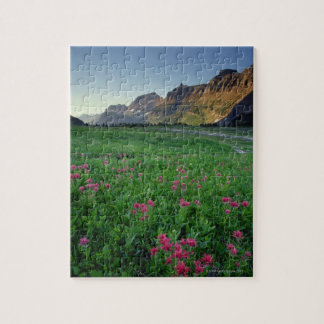 Indian paintbrush at Logan Pass , Glacier Jigsaw Puzzle