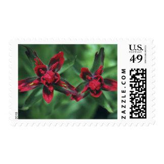 Indian Paintbrush, Banff NP, Alberta, Canada 2 Stamp