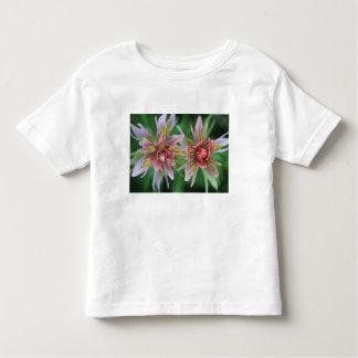 Indian Paintbrush, Banff NP, Alberta, Canada T Shirts