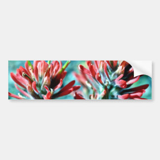 Indian Paintbrush Bumper Stickers