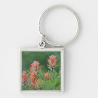 Indian Paintbrush, Castilleja miniata, Ouray, Silver-Colored Square Keychain