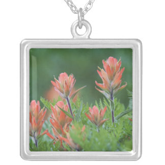 Indian Paintbrush, Castilleja miniata, Ouray, Square Pendant Necklace