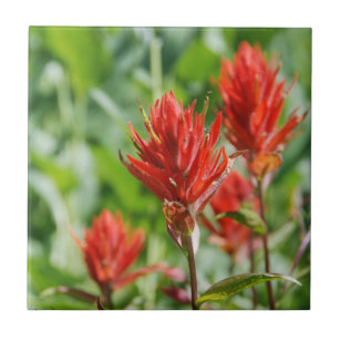 Indian Paintbrush Ceramic Tile