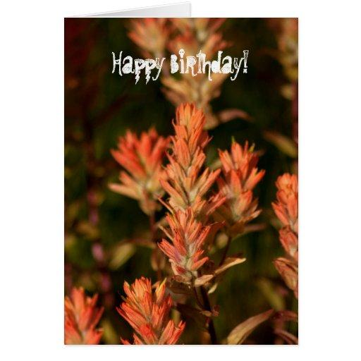 Indian Paintbrush; Happy Birthday Cards
