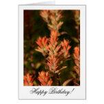 Indian Paintbrush; Happy Birthday Greeting Cards